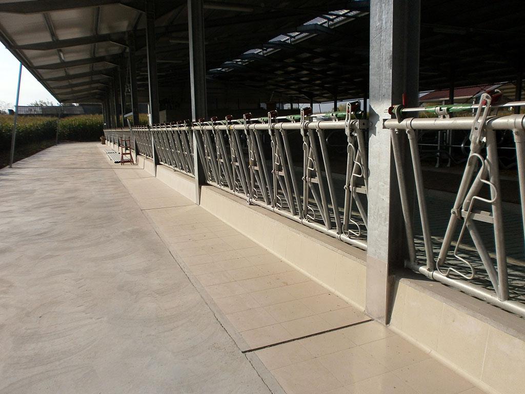 Mangiatoie prefabbricate per stalle dalla mora prefabbricati for Autocatture per bovini usate