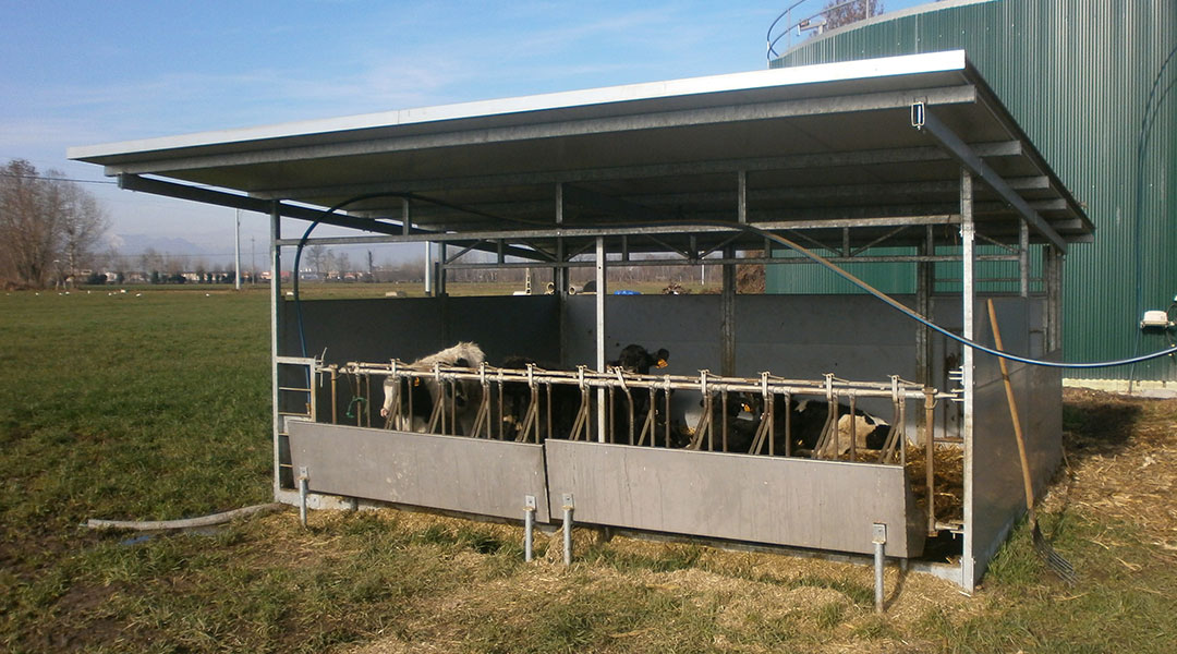 Ministalle prefabbricate per bovini vitelli vacche for Box per cavalli fai da te