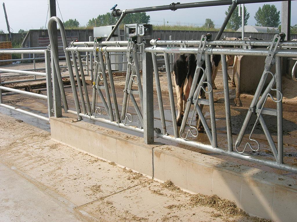 Rastrelliere autocatturanti autocatture per bovini for Autocatture per bovini usate